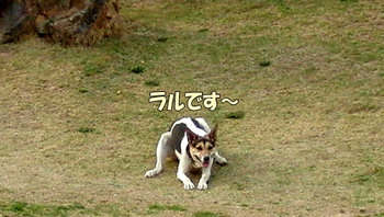 CIMG4741.jpg