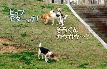 CIMG5427.jpg